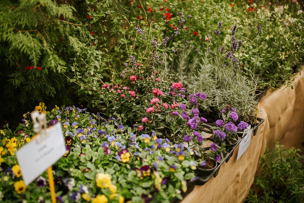 plantes greener good photographe culinaire